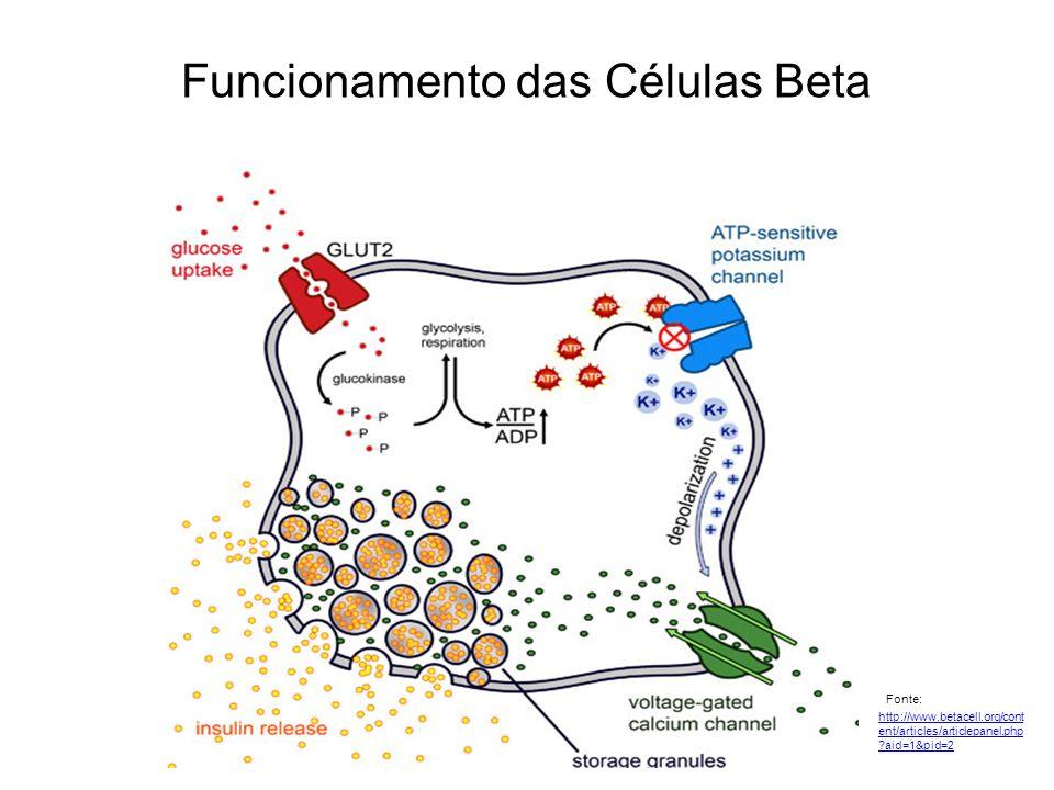 Funcionamento das Células Beta