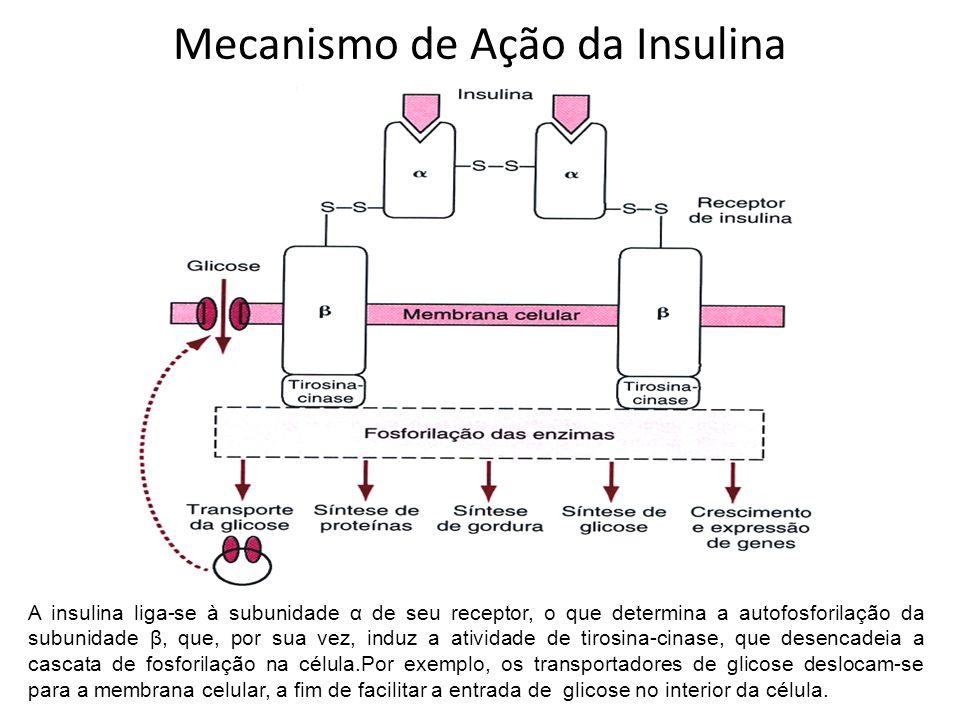 Mecanismo de Ação da Insulina