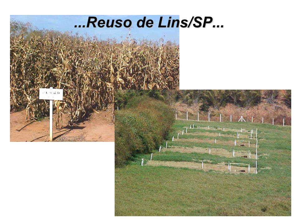 ...Reuso de Lins/SP...