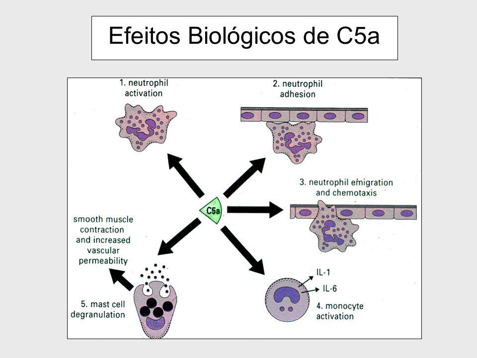 Efeitos Biológicos de C5a