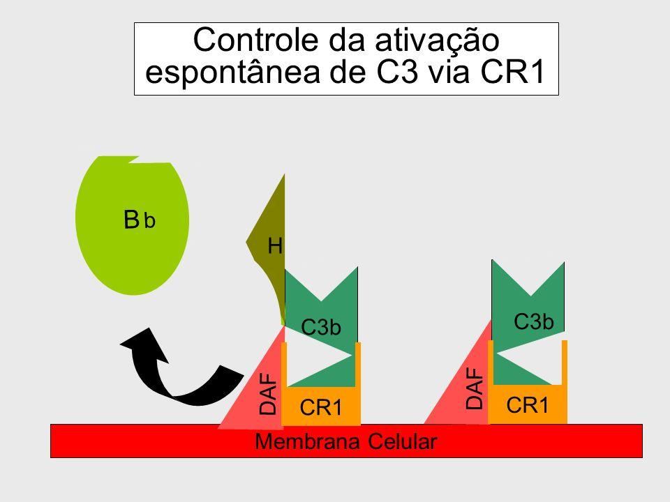 Controle da ativação espontânea de C3 via CR1