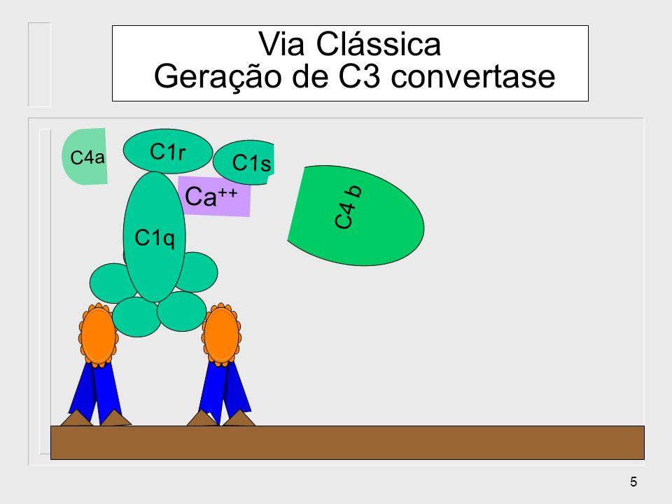 Via Clássica Geração de C3 convertase