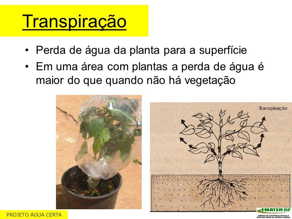Transpiração Perda de água da planta para a superfície