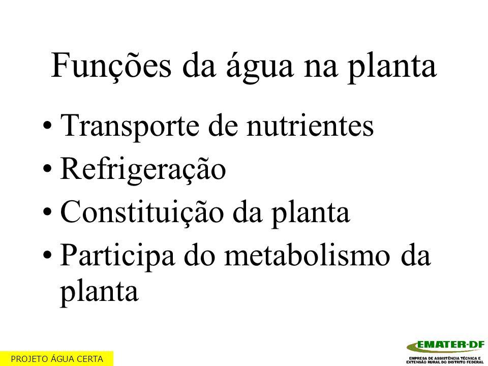 Funções da água na planta