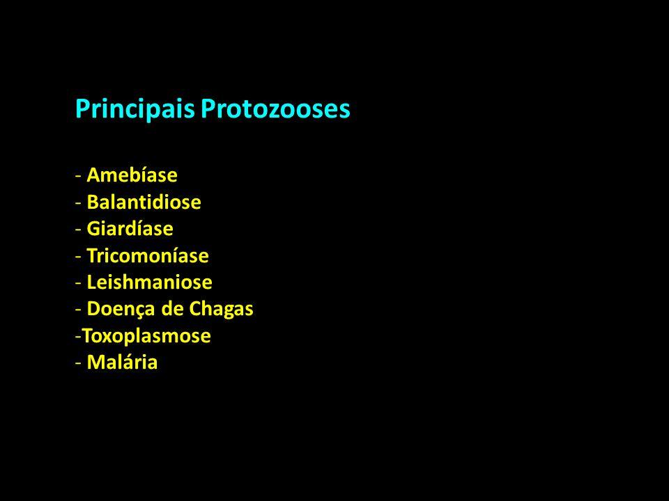 Principais Protozooses