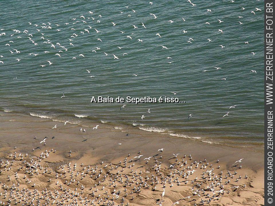 A Baía de Sepetiba é isso...