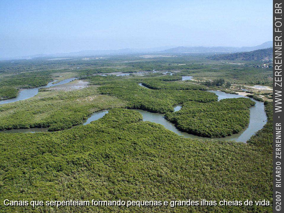 Canais que serpenteiam formando pequenas e grandes ilhas cheias de vida.