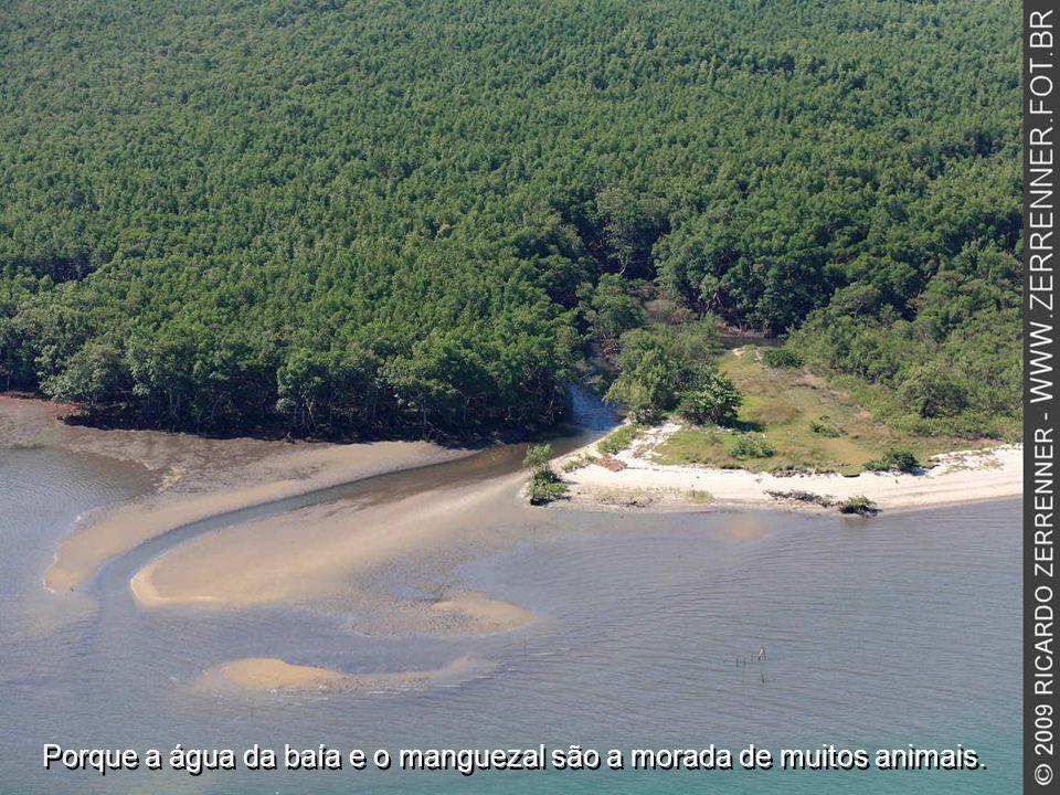 Porque a água da baía e o manguezal são a morada de muitos animais.