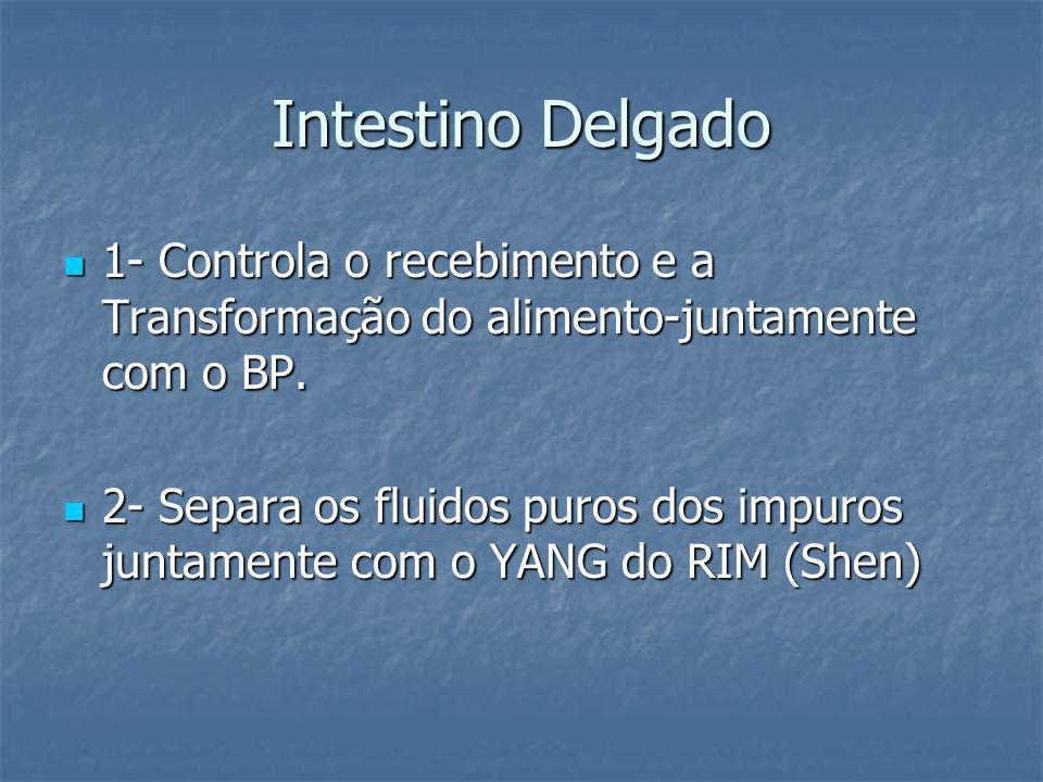 Intestino Delgado1- Controla o recebimento e a Transformação do alimento-juntamente com o BP.