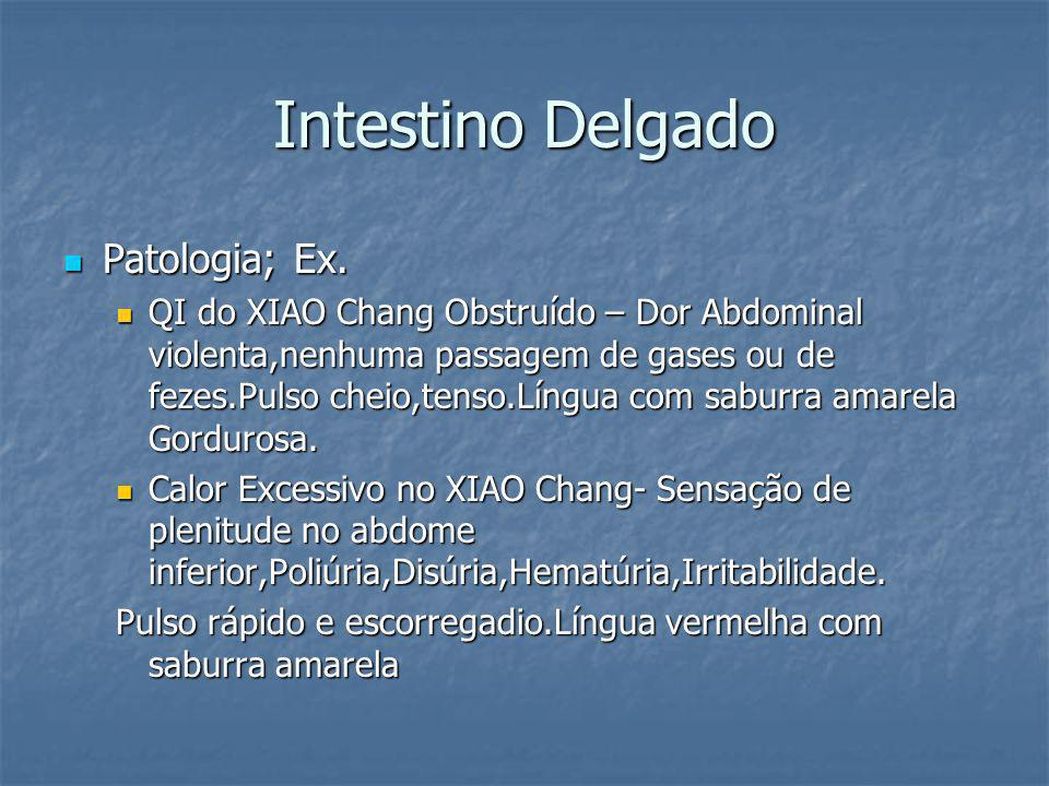 Intestino Delgado Patologia; Ex.