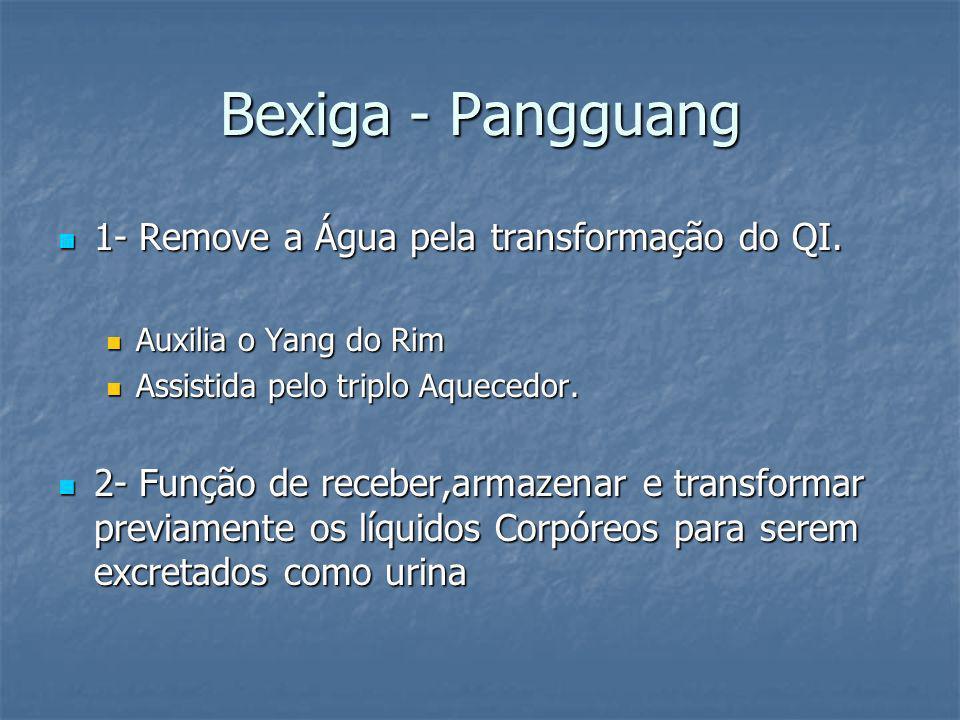 Bexiga - Pangguang 1- Remove a Água pela transformação do QI.