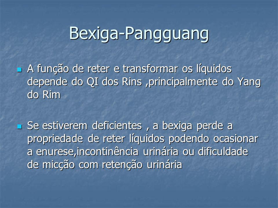 Bexiga-Pangguang A função de reter e transformar os líquidos depende do QI dos Rins ,principalmente do Yang do Rim.