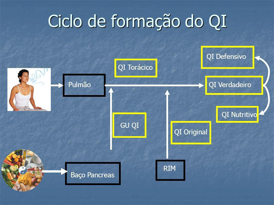 Ciclo de formação do QI QI Defensivo QI Torácico Pulmão QI Verdadeiro