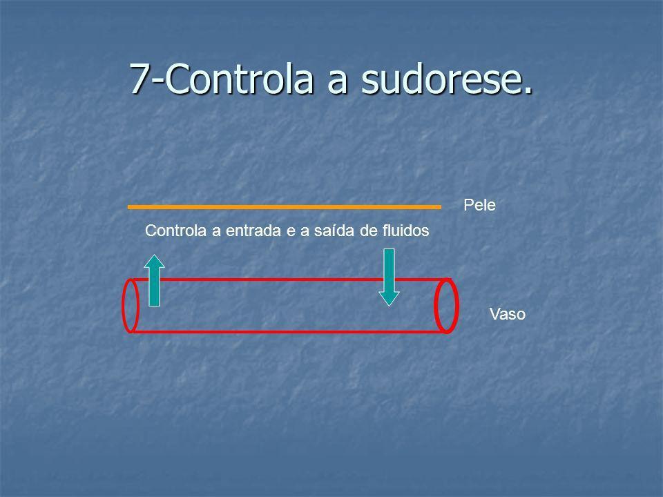 7-Controla a sudorese. Pele Controla a entrada e a saída de fluidos