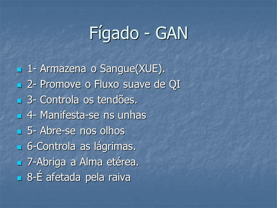 Fígado - GAN 1- Armazena o Sangue(XUE). 2- Promove o Fluxo suave de QI