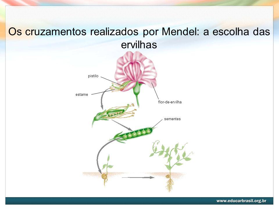 Os cruzamentos realizados por Mendel: a escolha das ervilhas