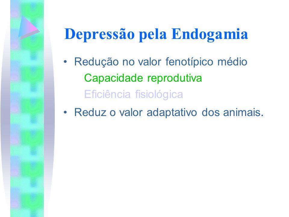 Depressão pela Endogamia