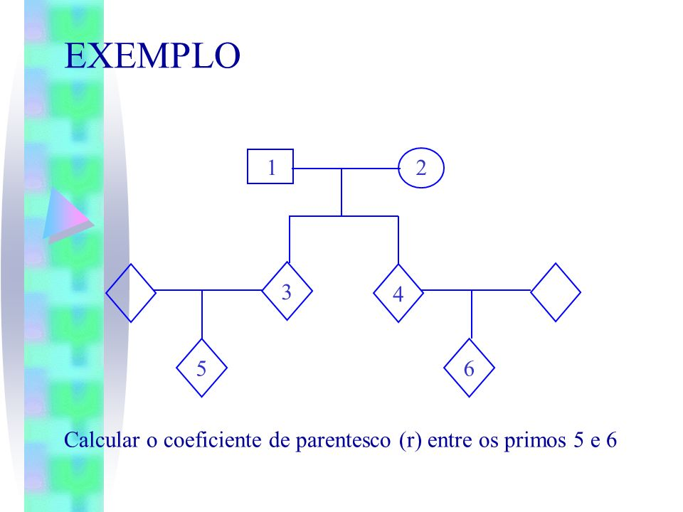 EXEMPLO 1 2 4 6 5 3 Calcular o coeficiente de parentesco (r) entre os primos 5 e 6