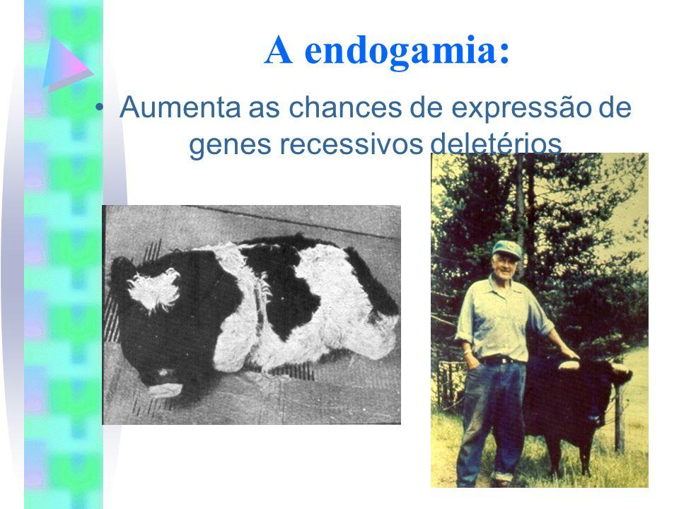 Aumenta as chances de expressão de genes recessivos deletérios