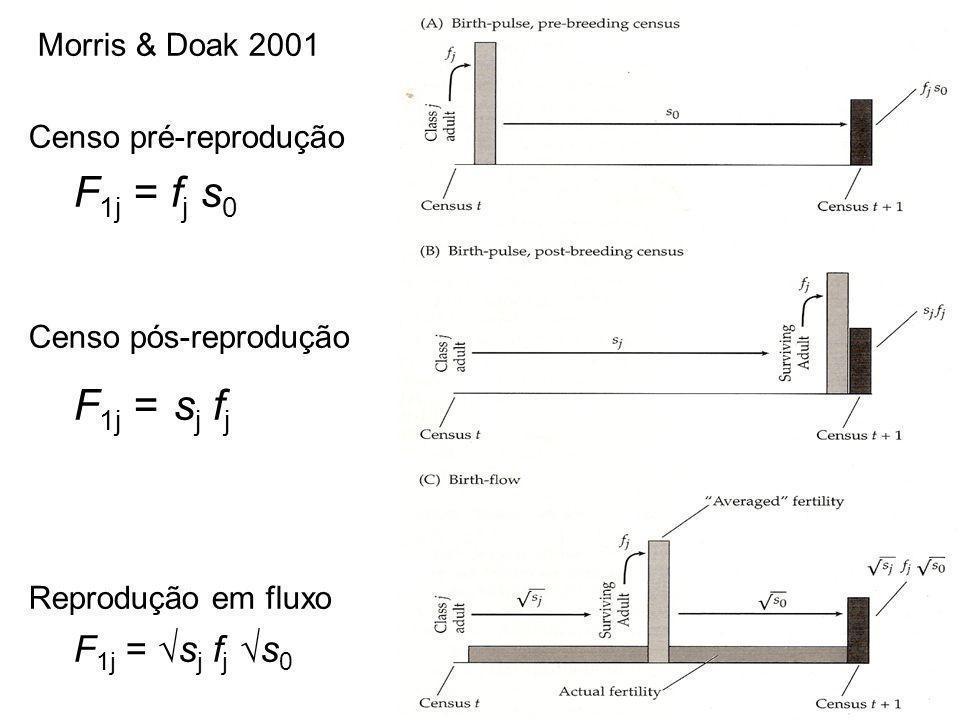 Morris & Doak 2001 Censo pré-reprodução. F1j = fj s0. Censo pós-reprodução. F1j = sj fj. Reprodução em fluxo.