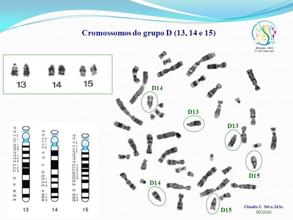 Cromossomos do grupo D (13, 14 e 15)