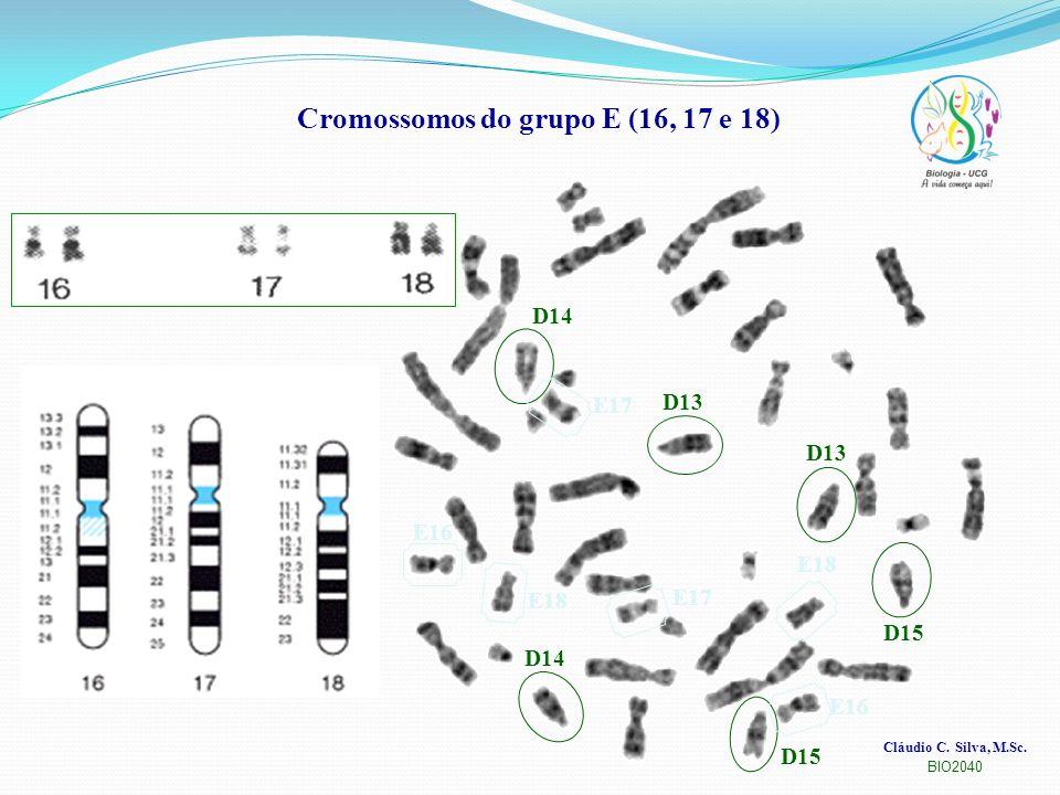 Cromossomos do grupo E (16, 17 e 18)