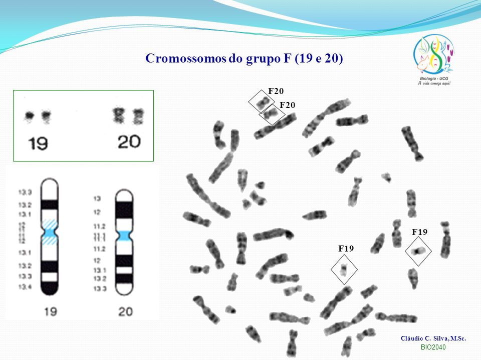 Cromossomos do grupo F (19 e 20)