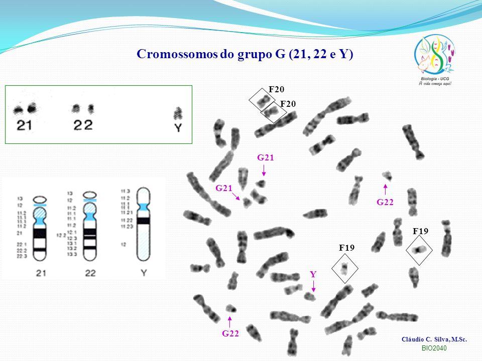 Cromossomos do grupo G (21, 22 e Y)