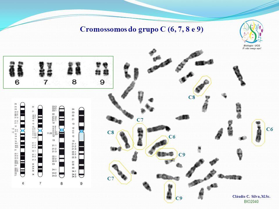 Cromossomos do grupo C (6, 7, 8 e 9)