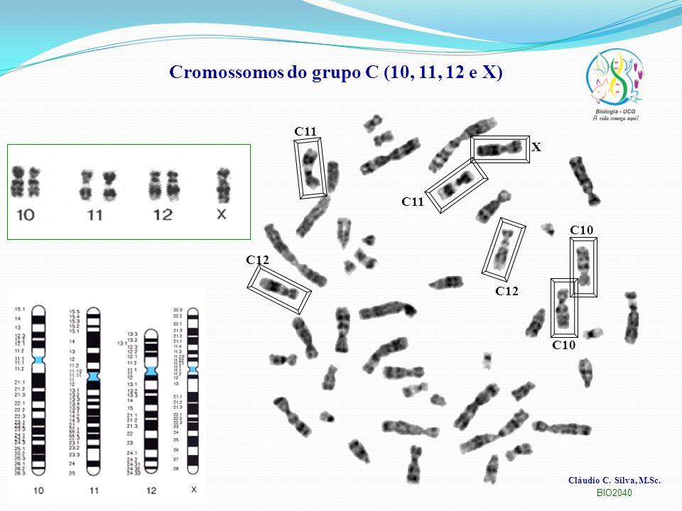 Cromossomos do grupo C (10, 11, 12 e X)