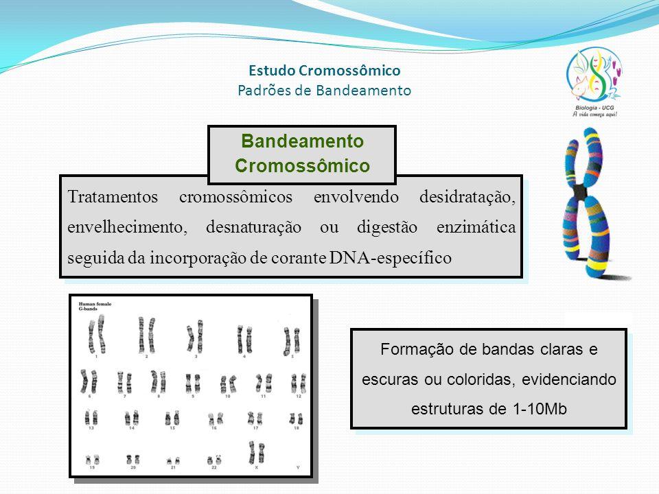 Estudo Cromossômico Padrões de Bandeamento