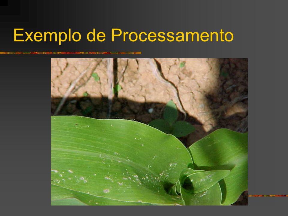 Exemplo de Processamento
