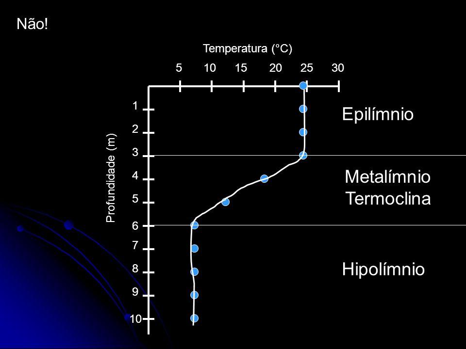 Epilímnio Metalímnio Termoclina Hipolímnio Não! Temperatura (°C) 5 10