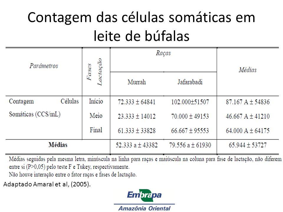 Contagem das células somáticas em leite de búfalas