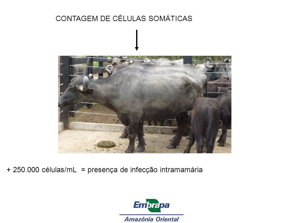 CONTAGEM DE CÉLULAS SOMÁTICAS