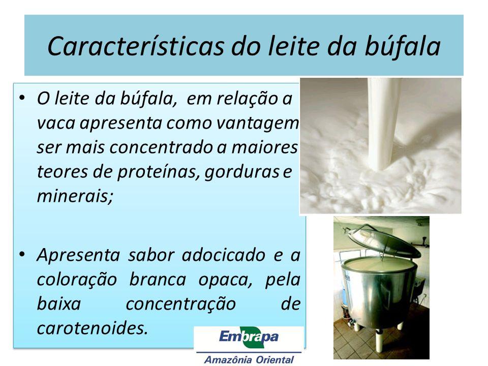 Características do leite da búfala