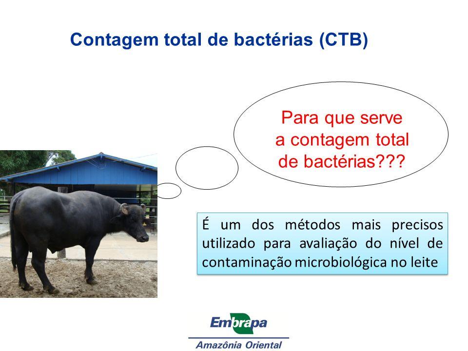 Contagem total de bactérias (CTB)