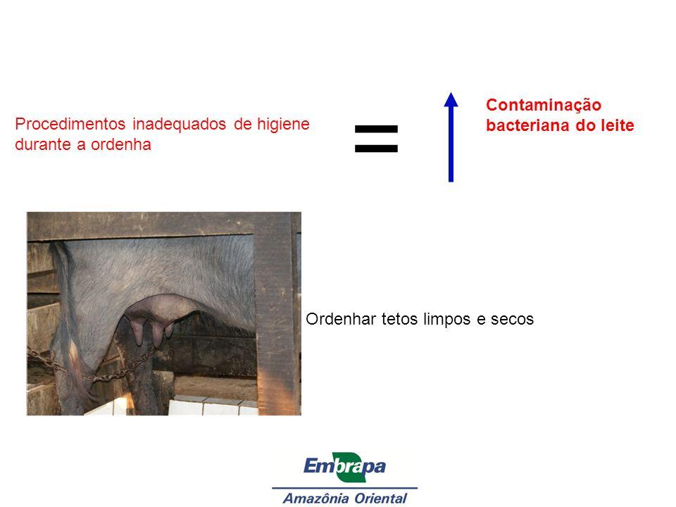 = Contaminação bacteriana do leite