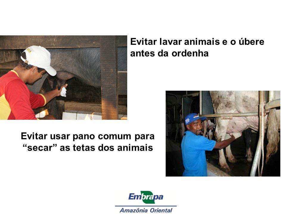 Evitar usar pano comum para secar as tetas dos animais
