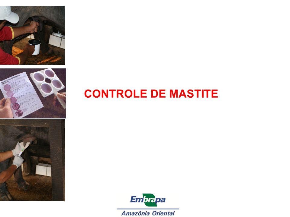 CONTROLE DE MASTITE 1