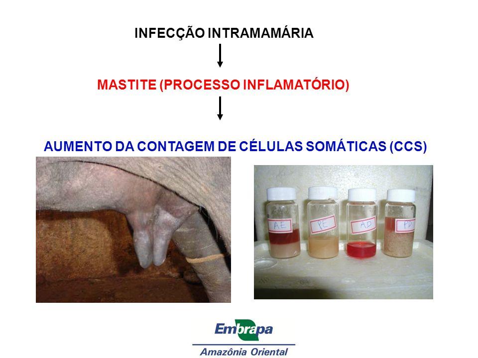 AUMENTO DA CONTAGEM DE CÉLULAS SOMÁTICAS (CCS)
