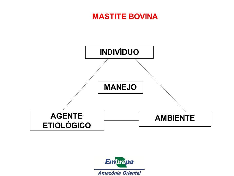 MASTITE BOVINA INDIVÍDUO AGENTE ETIOLÓGICO AMBIENTE MANEJO