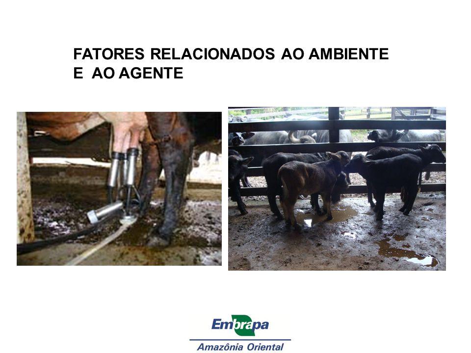 FATORES RELACIONADOS AO AMBIENTE