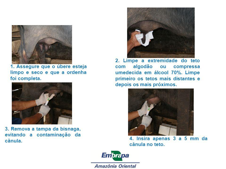 3. Remova a tampa da bisnaga, evitando a contaminação da cânula.