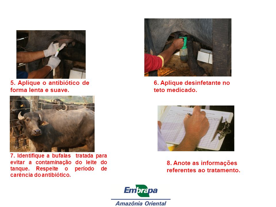 5. Aplique o antibiótico de forma lenta e suave.