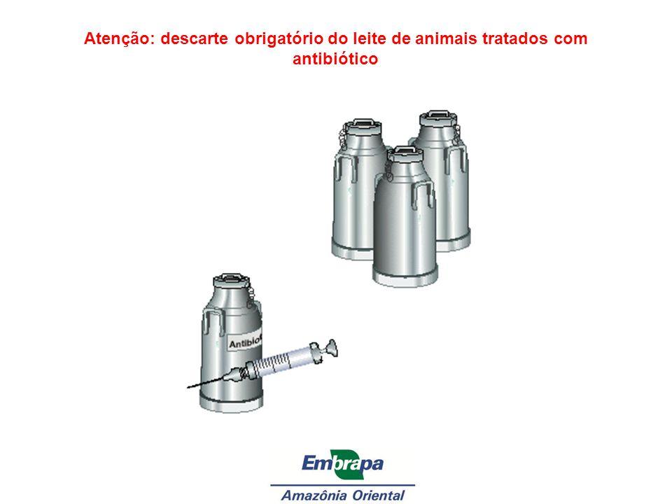 Atenção: descarte obrigatório do leite de animais tratados com antibiótico
