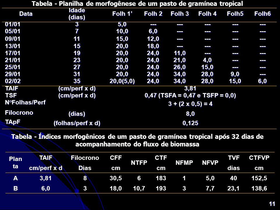 Tabela - Planilha de morfogênese de um pasto de gramínea tropical