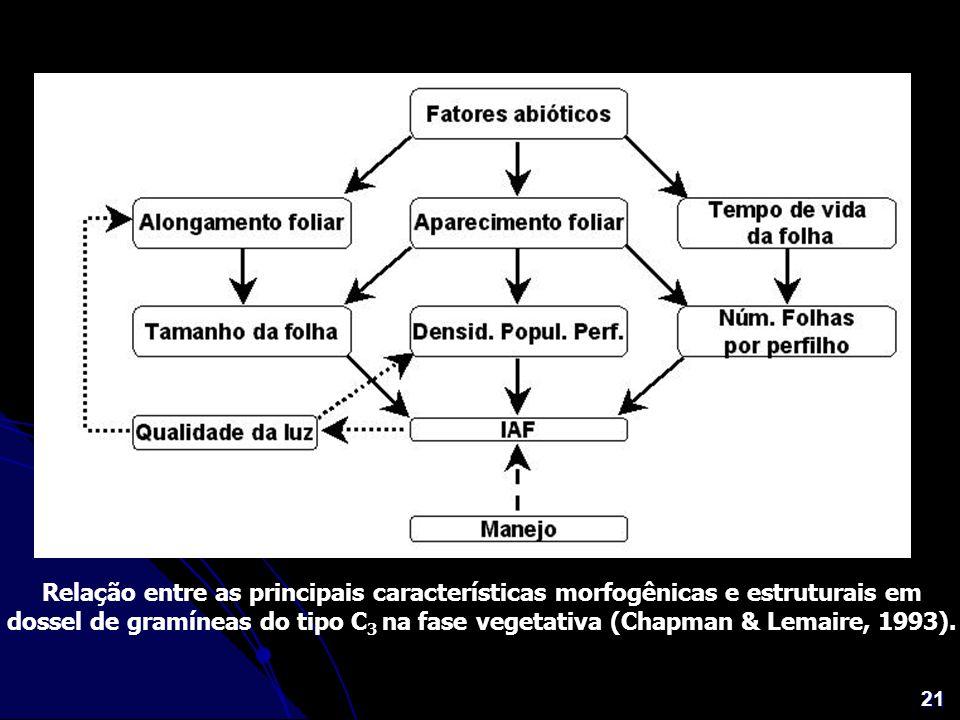 Relação entre as principais características morfogênicas e estruturais em dossel de gramíneas do tipo C3 na fase vegetativa (Chapman & Lemaire, 1993).