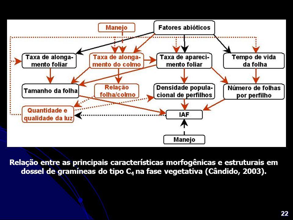 Relação entre as principais características morfogênicas e estruturais em dossel de gramíneas do tipo C4 na fase vegetativa (Cândido, 2003).