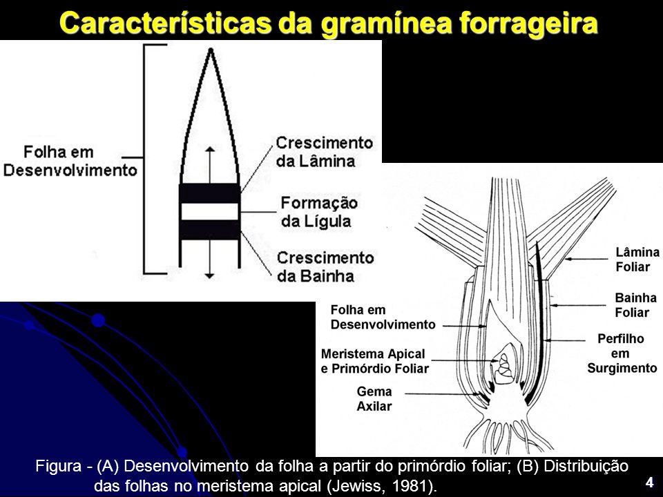 Características da gramínea forrageira